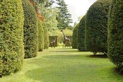 Jardin et arbres photo libre de droits