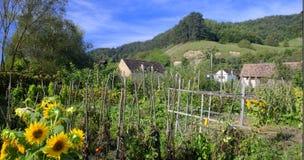 Jardin et bâtiments dans le village de Saxon, la Transylvanie, Roumanie Images libres de droits