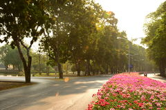 Jardin et fleur Photo stock