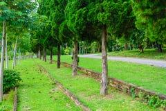 Jardin et route en parc Photo stock