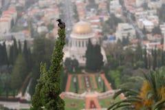Jardin et terrasses Haifu, Israël - 24 mars 2018 Images libres de droits
