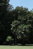 Jardin exotique photographie stock
