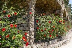 Jardin exotique avec des fleurs de ketmie en Espagne photos stock