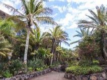 Jardin exotique avec des palmiers Photographie stock libre de droits
