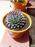 Jardin exotique d'agave de cactus d'usines Photos libres de droits
