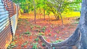 Jardin extérieur Images libres de droits