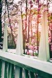 Jardin fleurissant de cerisier au printemps Image stock