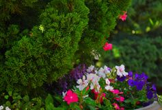 Jardin floral image libre de droits