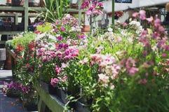 Jardin floral de serre chaude photos libres de droits
