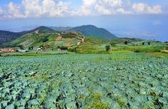 Jardin frais au-dessus du mountrain de la Thaïlande Image stock
