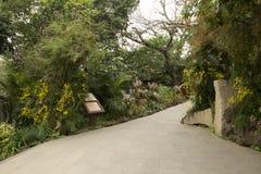 Jardin gentil d'orchidée en montagne Chine de Nanning Qingxiu Images stock