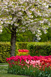 Jardin hollandais de source « Keukenhof » en Hollande Photographie stock libre de droits