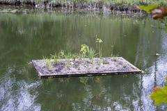 Jardin hydroponique de flottement sur la rivière d'Ausable en automne Image libre de droits