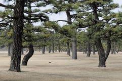 Jardin impérial de palais, Tokyo, Japon photo libre de droits