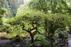 Jardin inspiré asiatique photos stock