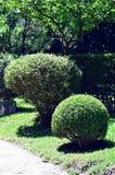 Jardin Japonés стоковые изображения rf