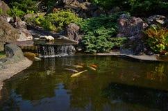 Jardin japonais Photos libres de droits