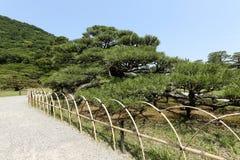 Jardin japonais avec des pins Images libres de droits