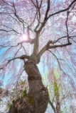 Jardin japonais commémoratif de Fujita dans Hirosaki, Japon images libres de droits