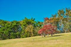Jardin japonais de parc comm?moratif de l'expo ?70 images libres de droits