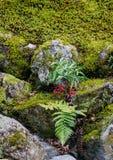 Jardin japonais de zen à Kyoto, Japon Photographie stock