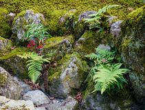 Jardin japonais de zen à Kyoto, Japon Image stock