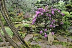 Jardin japonais en été avec le chemin en pierre Photographie stock