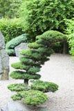 Jardin japonais en été, usines exotiques, Wroclaw, Pologne Images stock