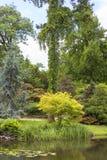 Jardin japonais, usines exotiques, ressort, Wroclaw, Pologne image libre de droits
