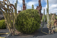 Jardin Lanzarote de cactus Images libres de droits