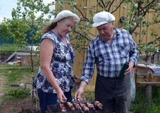 Jardin, les gens, aîné, femme, extérieur, famille, faisant du jardinage, couple, agriculteur, vieux, nature, marchant, enfant, je photos stock