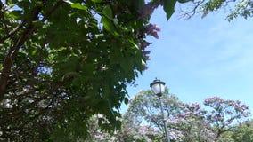 Jardin lilas ? Moscou banque de vidéos