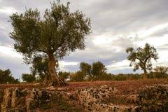 Jardin méditerranéen, plan rapproché la branche Image libre de droits