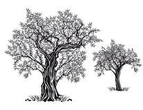 Jardin méditerranéen, plan rapproché la branche