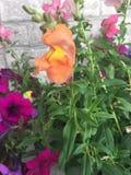 Jardin mélangé Photo libre de droits