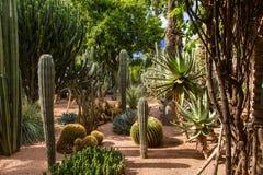 Jardin Majorelle i Marrakesh fotografering för bildbyråer