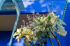 Jardin Majorelle by Yves Saint Laurent. Stock Photo