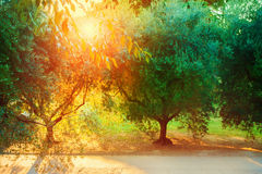 Jardin méditerranéen, plan rapproché la branche Photos libres de droits