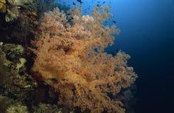 Jardin merveilleux de mer Images stock