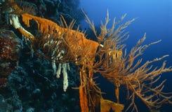 Jardin merveilleux de mer Photo stock