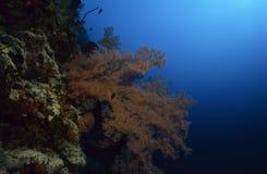 Jardin merveilleux de mer Photographie stock