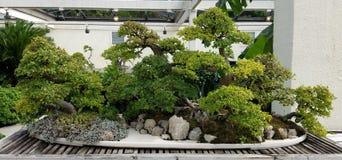 Jardin miniature de bonsaïs Photographie stock libre de droits