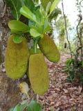 Jardin naturel de fruit en bois d'arbre forestier photo libre de droits