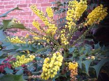 Jardin naturel jaune de fleurs beau Photos stock