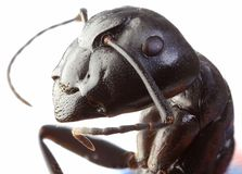 Jardin noir Ant Cutout photo stock