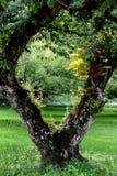 Jardin normal images libres de droits