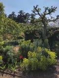 Jardin North Yorkshire - en Angleterre photo libre de droits
