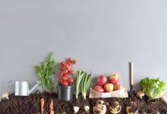 Jardin organique de fruits et légumes Photographie stock