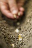 Jardin-outils de plantation Images libres de droits