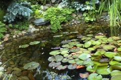 Jardin paisible. nenuphar Images libres de droits